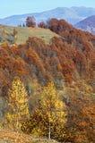 Otoño de oro en montaña Foto de archivo libre de regalías