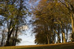 Otoño de oro que iguala luz del sol en árboles en un parque imagen de archivo