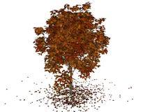 Otoño del árbol Foto de archivo libre de regalías