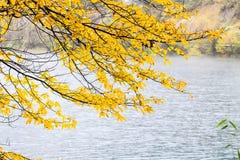 Otoño del árbol contra invierno Foto de archivo libre de regalías