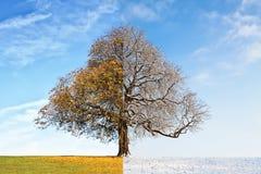 Otoño del árbol del collage contra invierno Fotografía de archivo