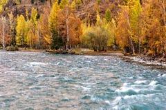 Otoño del abedul de agua de la turquesa del río Fotos de archivo libres de regalías