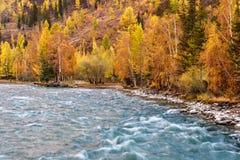 Otoño del abedul de agua de la turquesa del río Foto de archivo libre de regalías