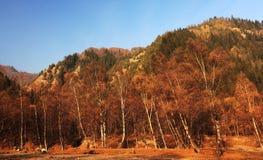 Otoño del bosque Imagen de archivo libre de regalías