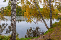 Otoño del bosque del abedul del lago Imágenes de archivo libres de regalías