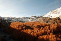 Otoño del bosque del honorario de Saas Fotos de archivo libres de regalías