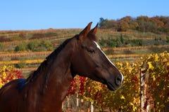 Otoño del caballo Fotos de archivo libres de regalías