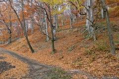 Otoño del color en bosque Fotografía de archivo