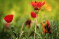 Otoño del flor Foto de archivo libre de regalías