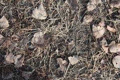 Otoño del follaje La naturaleza se descolora Primero de septiembre Fotografía de archivo