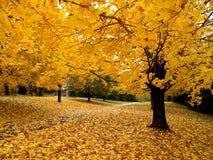 Otoño del oro de noviembre Imagen de archivo libre de regalías