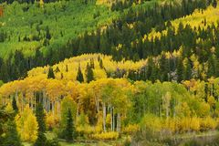 Otoño en Aspen Imagenes de archivo