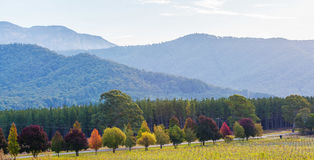 Otoño en Australia - fila de árboles coloridos y de colinas verdes en s Imagen de archivo libre de regalías