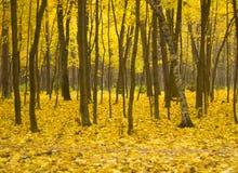 Otoño en bosque Fotografía de archivo libre de regalías