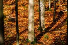 Otoño en bosque Imagen de archivo libre de regalías