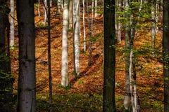 Otoño en bosque Imagenes de archivo