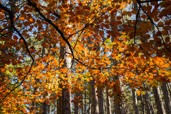 Otoño en bosque Foto de archivo libre de regalías