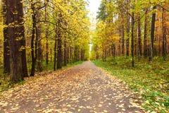Otoño en bosque del pino y del abedul Imágenes de archivo libres de regalías