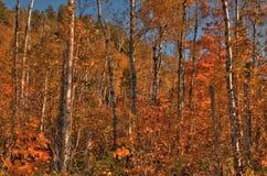 Otoño en Carlton Peak de las montañas del diente de sierra en Minnesota septentrional en la orilla del norte del lago Superior Fotos de archivo libres de regalías
