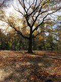 Otoño en Central Park foto de archivo