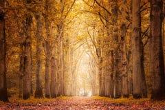 Otoño en el bosque Imágenes de archivo libres de regalías
