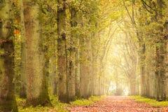 Otoño en el bosque Imagenes de archivo