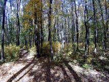 Otoño en el bosque almacen de metraje de vídeo