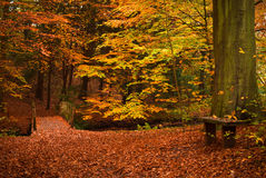 Otoño en el bosque imagen de archivo libre de regalías