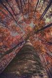 Otoño en el bosque Foto de archivo libre de regalías