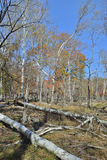 Otoño en el bosque 12 Imágenes de archivo libres de regalías
