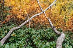 Otoño en el bosque de hojas caducas Fotos de archivo