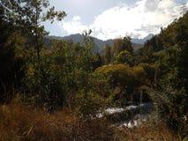 Otoño en el bosque de la montaña Fotografía de archivo libre de regalías