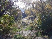 Otoño en el bosque de la montaña Foto de archivo libre de regalías