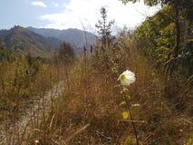 Otoño en el bosque de la montaña Fotos de archivo libres de regalías