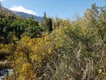 Otoño en el bosque de la montaña Imagenes de archivo