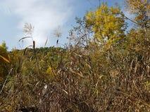 Otoño en el bosque de la montaña Fotografía de archivo