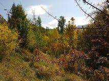 Otoño en el bosque de la montaña Imagen de archivo