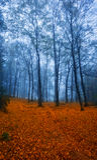 Otoño en el bosque, Geres Foto de archivo libre de regalías