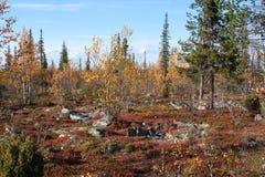 Otoño en el bosque profundo de Taiga, Finlandia Imágenes de archivo libres de regalías
