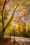 Otoño en el grande parque de Campo Imagen de archivo