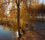 Otoño en el lago Imagen de archivo libre de regalías