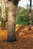 Otoño en el parque Foto de archivo libre de regalías