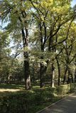 Otoño en el parque imágenes de archivo libres de regalías