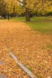 Otoño en el parque Fotografía de archivo