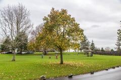 Otoño en el parque Imagenes de archivo