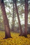 Otoño en el parque de Goldsworth en Woking imagen de archivo