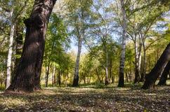 Otoño en el parque de la ciudad fotografía de archivo libre de regalías