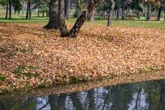 Otoño en el parque de la ciudad Fotografía de archivo