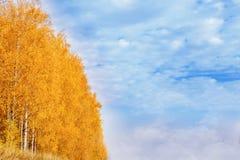 Otoño en el parque de oro Hojas del árbol de abedul amarillo sobre el cielo azul Foto de archivo