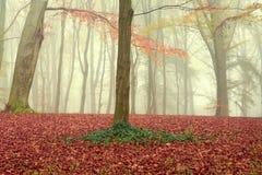 Otoño en el parque, hojas coloridas, día de niebla de la caída Foto de archivo libre de regalías